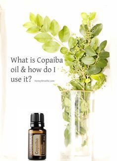 Are you wondering what the new Copaiba oil is all about?! Check it out here! doTERRA | CBD | THC | CPB | Essential Oils | Nervous System