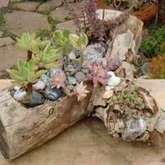 Driftwood found on the beach & used for plants in the garden or home.