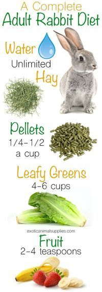 Pet Rabbit Diet: Bunny Food & Nutrition Exotic Animal Supplies : A complete adult rabbit diet. These are all the healthy foods to feed your bunny. Unlimited hay and fresh water. 1 4 1 2 cups of pellets per day. 4 6 cups of leafy greens. 2 4 teaspoons o Pet Bunny Rabbits, Meat Rabbits, Raising Rabbits, Food For Rabbits, Vegetables For Rabbits, What To Feed Rabbits, Fresh Vegetables, Rabbit Diet, Rabbit Food List