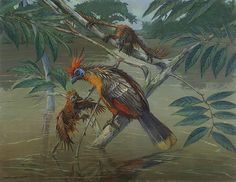 Hoatzin Rising from the River by ACE Coinage painting by Michael Rothman Prehistoric Wildlife, River Painting, Creature Concept Art, Creatures, Birds, Wall Art, Dinosaurs, Animals, Random