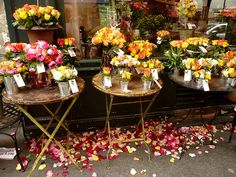 Paris is a rose by manu/manuela, via Flickr