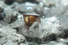 Anatase miel sur Adulaire et Quartz (backlight). Prentag, Gwynedd, Wales, UK Taille cristal=~1.5 mm Peter Ward / Matyn Coles