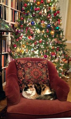 Books, cat, comfy chair, beautiful tree... all set for the holidays!