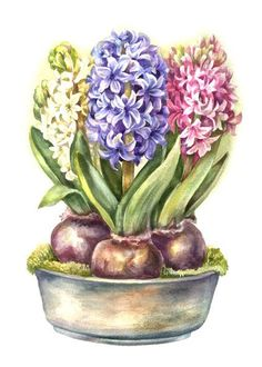 Three little hyacinths. - illustration, spring, art - My site Art Floral, Watercolor Flowers, Watercolor Paintings, Le Clown, Foto Transfer, Decoupage Vintage, Spring Art, Botanical Art, Vintage Flowers