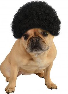 Afro Dog Wig - Black | See more funny and cute animal videos here http://gwyl.io/