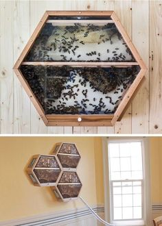 Eco-driven designers Dustin Betz and Mike Zaengle created BEEcosystem, a modular observation beehive.