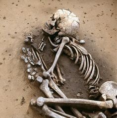 Picture of burial of male individual associated with the Middle Neolithic Salzmünde culture