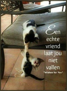 Katten....inderdaad,maar zij zijn vrienden voor het leven........... lb xxx.