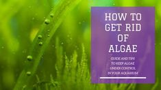 How to Get Rid of Algae in your Fish Tank. Here is how to remove and prevent algae to proliferate in your aquarium. Saltwater Tank, Saltwater Aquarium, Saltwater Fishing, Aquarium Algae, Aquarium Fish Tank, Fish Aquariums, Fishing Life, Fly Fishing, Tropical Fish Tanks