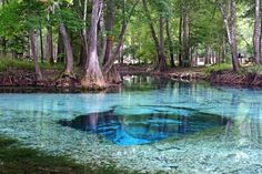 Devil Spring - one of seven springs that are located in the private Ginnie Springs park (northern Florida), a cave divers paradise. For non-divers there is still plenty to see when snorkelling. (The intense blue colour is due to the water depth at the cave opening).  |  Photo by Christoph Nagy