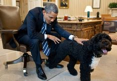 President Barack Obama pets Bo, the Obama family dog, in the Oval Office, June (Official White House Photo by Pete Souza) Bo Obama, Barack Obama Family, Obama 2008, Michelle Obama, First Black President, Mr President, Black Presidents, American Presidents, Pets