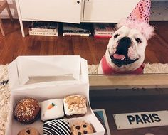 Happy birthday Nyla  #thedogbakery  Photo by @kelizaparada