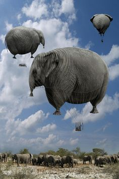 I want to ride in an elephant shaped hot air ballon :p Elephant Love, Elephant Art, African Elephant, Flying Elephant, Chris Bennett, Elephant Balloon, Gentle Giant, Surreal Art, Hot Air Balloon