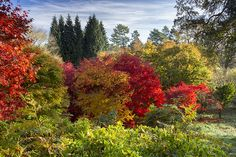 """Article: November garden events: Britain is in the grip of the annual riot of autumn colour - so it's time to go out and enjoy this """"second Spring where every leaf is a flower."""""""