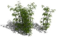 Large preview of 3D Model of Modified Bamboo Model (Hidden Leaf Group Wireframes)