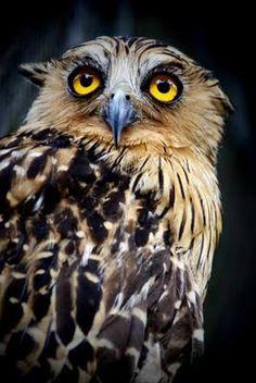A big owl