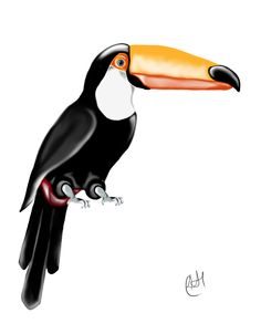 """Toucan"" ©Bubble Trump Ltd. All rights reserved. Our work may not be reproduced, copied, edited, published, transmitted in any way without permission. Bubbles, Animals, Animales, Animaux, Animal, Animais"