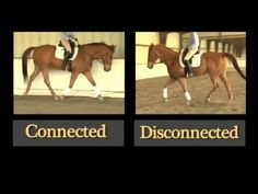 How to Engage the Back of your Horse while Riding - YouTube