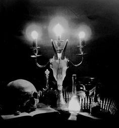 Skull and bones | http://creaturecraft.co