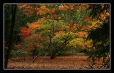 Autumn by eigensheep.deviantart.com on @deviantART