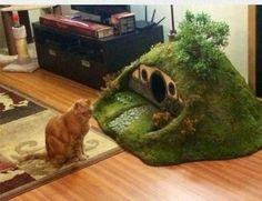 Cat haven