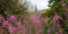 Schottland Roadtrip - Tagebuch einer Schottland-Rundreise. Hotelempfehlungen, Tops & Flops, Geheimttipps u.v.m.