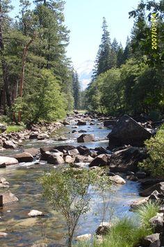 California Redwood Yosemite National Park | ... national park tag eureka jamestown yosemite national park california