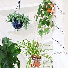 Sous l'escalier 🌿 . . #plantsofinstagram #LeGangDesPlantes #crazyplantlady #philodendronscandens #chlorophytum #sedummorganianum