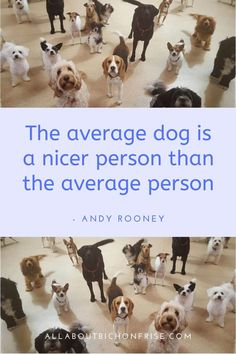 Our dogs are our best friends in the world without a doubt. Show your love and appreciation for these adorable doggos with these 21 inspiring dog quotes. John Grogan, Andy Rooney, Great Quotes, Inspirational Quotes, Cesar Millan, Average Person, Little Puppies, Bichon Frise, Love You More Than