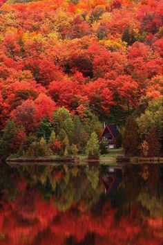 Cabin hidden in the trees. Autumn in #Quebec, Canada. #cabin #fall