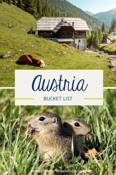 My Austria Bucket List shows you the most beautiful places in my home country. Over 60 places, locations and activities that you can experience and discover throughout Austria. Get inspired for your next trip to Austria with this Bucket List! #BucketList #Austria #TravelTips #Travel #Europe #Roadtrip #TravelInspiration Cool Places To Visit, Places To Travel, Amazing Destinations, Travel Destinations, Europe Travel Tips, Travel Guides, Backpacking Europe, Berlin, Adventures Abroad