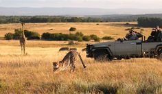 Lalibela Game Reserve and Safari Lodge, Addo Elephant Park, Eastern Cape, South… Safari Crafts, Game Reserve South Africa, Elephant Park, Game Lodge, Local Tour, Tree Tops, African Safari, Tourism, National Parks