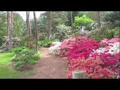 Peak Blooming Time at Brueckner Rhododendron Garden Mississauga Canada
