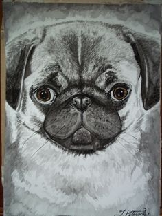 Checkout this amazing product Pug Shot,$10