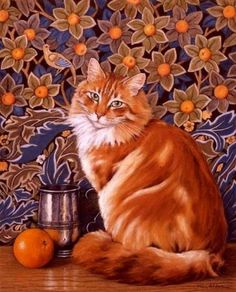 The orange  Maine Coon  cat, J. Alderton