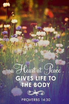Proverbs 14:30 A Heart at peace gives life to the body.