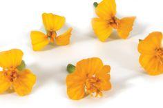 Anise Blossom : Fleurs comestibles de la Maison Butet à Rungis Stud Earrings, Boutique, Plants, Jewelry, Edible Flowers, Products, Home, Earrings, Jewlery