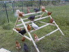 Why didn't I think of this?     How to build a simple jungle-gym for your chickens