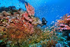 Join us Pict from our dive instructor See you… Komodo National Park, National Parks, Komodo Island, Underwater Life, Diving, Join, Coral, Mountains, Travel