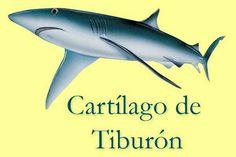 El Cartílago de Tiburón, sus beneficios para la salud te sorprenderán | ConSalud.info