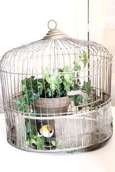 Common Ground: What to do with vintage birdcages...