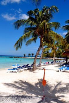 Aruba!  I will be there February 7th & did not know they had flamingos..oes..? ..ie?