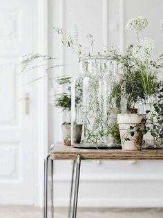 Идея интерьера для маленькой комнаты: растения в дизайне