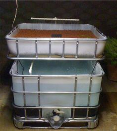 Hydroponic Gardening Ideas Aquaponics system, grow plants above, raise Tilapia below. Aquaponics Fish, Fish Farming, Aquaponics System, Backyard Aquaponics, Shrimp Farming, Hydroponic Systems, Backyard Farming, Indoor Vegetable Gardening, Hydroponic Gardening