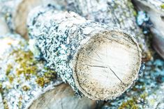 Log, wood, moss and bark HD photo by Kim André Fladen (@kimandrefladen) on Unsplash