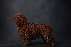Canine Collective: A Dog Breed Photo Series from Ty Foster - Dog Milk Akc Dog Breeds, Dog Milk, Foster Dog, Stunning Photography, Photo Series, Dog Portraits, Beautiful Dogs, The Fosters, Pet Products