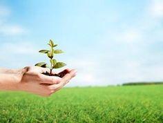 Estamos na Semana Mundial do Meio Ambiente que ocorre de hoje até o dia 5 de junho. Este período busca chamar atenção e promover o aumento da preservação ambiental e da conscientização. O Siveira Eco Village não tem este nome por acaso mas porque demonstra através de ações práticas e aplicação de modelos de sustentabilidade reconhecidos em gestão ambiental a sua preocupação e compromisso com a preservação do meio ambiente. Venha aproveitar Garopaba e conhecer nossas ações ambientais…