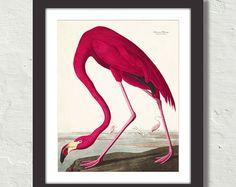 Vintage Audubon Pink Flamingo Bird Print by BelleMerGraphics