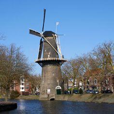 Mühle De Walvisch in Schiedam