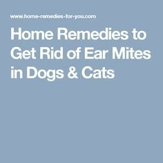 Ear mites cause a very irritating infection in dogs or puppies, cats or kittens and other pets. Here are effective home remedies to get rid of ear mites in dogs & cats. Mites On Humans, Mites On Dogs, Herbal Remedies, Home Remedies, Natural Remedies, Bitter Taste In Mouth, Human Food For Dogs, Sugar Health, Dogs Ears Infection